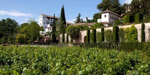 Vinos de Granada: un privilegio para el paladar con raíz histórica